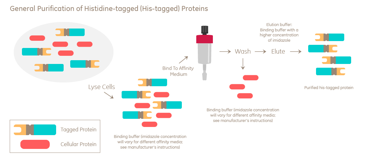 protein purification principles high resolution methods and applications